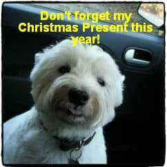Christmas Present Ideas for Dogs