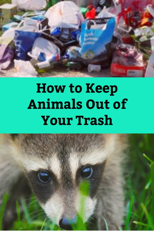animal proof garbage bins