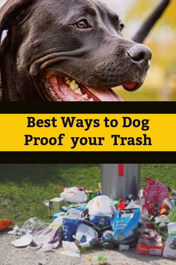 animal proof garbage cans dog proof your garbage